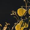 季節の変わり目のめまいを漢方薬で克服ー五苓散、真武湯、苓桂朮甘湯
