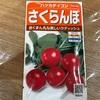 作物No.15 ラディッシュ『さくらんぼ』の播種をしました〜何日で収穫できるかな?〜