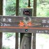 京都 青モミジの清滝