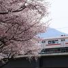 長野電鉄村山橋付近の桜が見ごろに