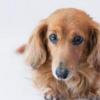 犬のメイちゃん物語その後1|サロン・オンライン・ヒーリング・動物ヒーリング