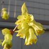 春の気配 ~ その⑦ ~