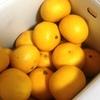 柑橘の中で一番好きなやーつ