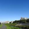 ~恩田川の何気ない日常風景~ 野鳥ほか撮影《第37回目》