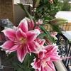 今日はキン242白い風 青い鷲音8の日。人も花も出会い大切にね!