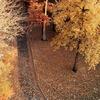 秋の紅葉と健康と
