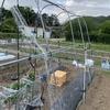 トマトとキュウリのミニハウス設置と定植