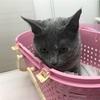 猫の耳ダニ治療