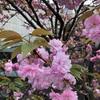 桜とハンドメイドと進級手続き
