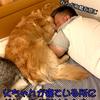 父ちゃんと密着しながら寝るゴールデンレトリバー