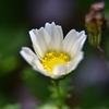 🌼近所で花を接写撮影しました!