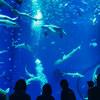 アクアワールド茨城県大洗水族館でクラゲを見る