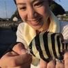 女子でも釣れる!和歌山南紀サビキ釣りのススメ