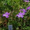 白山高山植物園2017(前編)