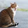 【美輪明宏】美輪さん、猫ブームと化け猫女優について語る