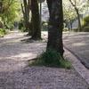 桜の花びらの絨毯