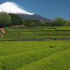 茶畑と富士山 ついでにレンゲ畑と新幹線