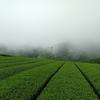 霧の朝と晴れの昼間