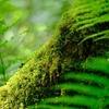 高原ツーリング #緑の森