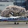 2019年4月4日(木)① JA315G「くにかぜⅢ」国土地理院 調布飛行場