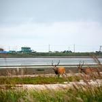 「この世の果て」、野付半島 「トドワラ」~北海道の最果ての地に、この世の終わりと言う光景が。。。