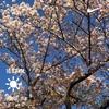 タニワキ日記(4月15日)