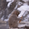 【旅行記】北信州⑥〜スノーモンキーが可愛すぎて2日連続で野猿公苑に行く〜