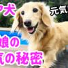 元気いっぱいシニア犬リオの5つの秘密