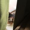 【愛猫日記】毎日アンヌさん#11