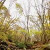 赤坂谷から釈迦ヶ岳 紅葉渓泊で八風越え 2日目 H23.10.30 曇/雨