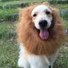 ライオン大会
