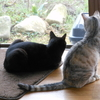 猫の友、『ちうちうさん』。