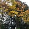 仙台市 茂ヶ崎の紅葉