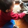 息子に触られても怒らない風ちゃん。