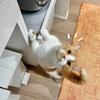 絶賛家電買い替え中のわがや。新し物好きの愛猫がソワソワしています。