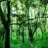 ルソン島北部バギオのエコツーリズム キャンプ・ジョン・ヘイ【フィリピン】