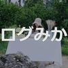 済州島(チェジュ島)カフェ*みかん畑の中にあるインスタ映え抜群の「アナログみかん畑・아날로그감귤밭」