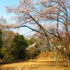 小谷城 浅井三姉妹が父と暮らした城