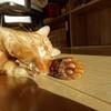 猫がカワイイのはなぜ?
