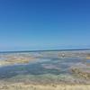 【沖縄】浦添のPARCO前の海は竜宮城?干潮時に来るのがおすすめ