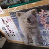 【青森・鰺ヶ沢】ブサカワ犬の、わさお~(笑)