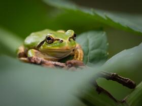 妻の実家へ帰省がてら、雨上がりの旭川・嵐山公園で写真撮影