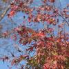植物園で写真撮影。【中編】晩秋の匂いを感じる