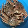 ふるさと納税で鳥取県東伯郡湯梨浜町から頂いた親ガニで蟹づくしディナー