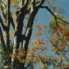 大山崎 Leica M3 CineStill 50D その3