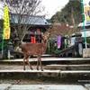 【 #宮島探訪 ③】厳島神社を護った寺院(12/16〜17)【大願寺+大聖院】