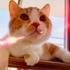 【猫学】6ヶ月間、初心者が猫ブログを毎日更新してみた。