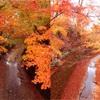 【紅葉見頃】見頃のピークから約1週間で、紅葉はどれくらい進むのか【1週間後】