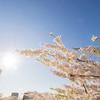 【一日一枚写真】陽に指触れる【一眼レフ】