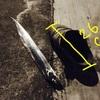 【今年初】タチウオ調査のオハナシ。【神戸空港】